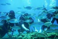 Rhodes Scuba Diving Experience for Beginners