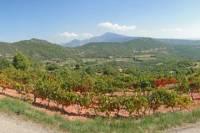 Rhone Valley Wine Tour from Avignon