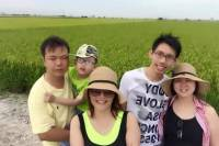 Rice Fields and Fireflies Tour including Lunch and Dinner from Kuala Lumpur