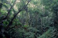 Rio de Janeiro Botanical Garden and Tijuca Rainforest Eco-Tour