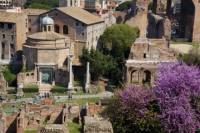 Rome Super Saver: Skip-the-Line Ancient Rome and Colosseum Walking Tour plus Frascati Wine Tasting Tour