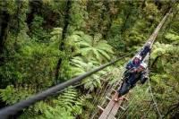 Rotorua Forest Zipline Canopy Adventure