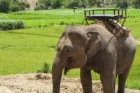Rural Thailand Tour from Phuket Including Elephant Ride and Chalong Bay Cruise