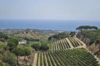 Sailing and Vineyard Guided Tour from Barcelona