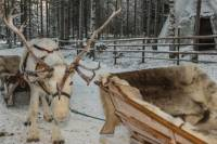 Sami Cultural Tour from Tromso: Reindeer Sleigh Ride, Lavvu Campfire and Optional Northern Lights Overnight Lavvu Stay