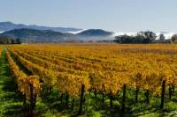 San Francisco Shore Excursion: Private Tour to Wine Country by Luxury Transport