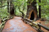 San Francisco Super Saver: Muir Woods and Wine Country Tour