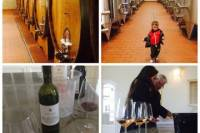 Sangiovese Wine Tour with 2 Wineries and Lunch