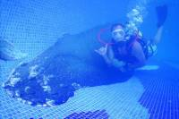 SCUBA Pool and Beach Dive for Beginners