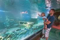 SEA LIFE Aquarium Arizona