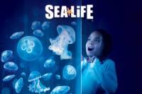 SEA LIFE Charlotte–Concord Aquarium