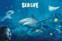 SEA LIFE Kansas City Aquarium