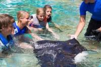 Sea Life Park Hawaii Admission with Optional Hawaiian Ray Encounter