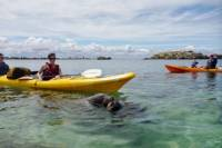 Seal and Penguin Islands Sea Kayak Tour from Perth