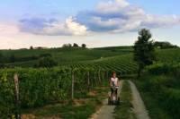 Segway Tour Monferrato Hills and Tastings