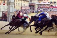 Siena Palio Horse Race Day Trip from Florence