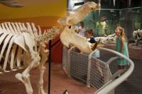Skeletons: Animals Unveiled Museum Admission