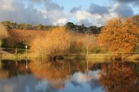 Small-Group Fleurieu Peninsula Food and Wine Experience by 4WD
