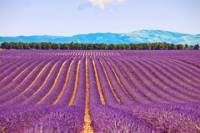 Small-Group Lavender Day Trip from Avignon: Aix-en-Provence, Valensole Plateau and L'Occitane Factory