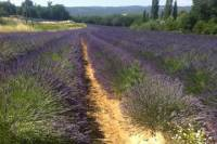 Small group lavender tour of Luberon Villages, Lourmarin, Roussillon and Sault from Aix-en-Provence