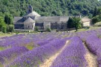 Small group Lavender Tour to Gordes, Abbey of Senanque and Roussillon or Sault from Avignon