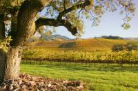 Small-Group Napa and Sonoma Wine Country Tour with Lunch