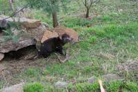 Small-Group Tour from Hobart Including Bonorong Wildlife Sanctuary and Richmond Historic Village