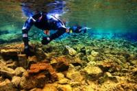 Snorkeling in Thingvellir National Park and Whale Watching Cruise from Reykjavik