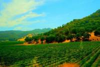 Sonoma and Napa Wine Country Day Trip from San Francisco