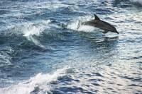 South Coast Day Trip from Sydney with Jervis Bay Dolphin Watching Cruise