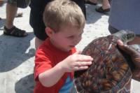 Stingray City and Turtle Farm Half-Day Tour