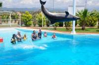 Swim with Dolphins at Sealanya Dolphinpark