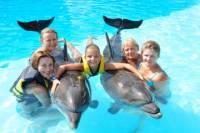 Swim with Dolphins in Sharm el Sheikh