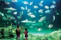 Sydney Pass: SEA LIFE Aquarium, Sydney Tower Eye, WILD LIFE Sydney, Sydney Harbour Cruise, and Madame Tussauds