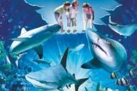 Sydney Shore Excursion: Skip-the-Line SEA LIFE Sydney Aquarium Entrance Ticket