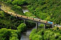 Taieri Gorge Railway and the Otago Peninsula Day Trip from Dunedin