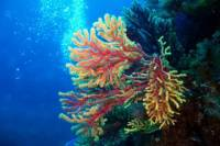 Taormina Children's Diving Experience: PADI Bubble Maker Diving Course at Isola Bella