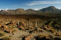 Tenerife Shore Excursion: Private Teide National Park and Winery Tour with Lunch