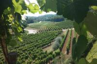 The Best of Istria Wine Tour