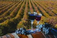 The Ultimate Wine Lovers Day Trip to Napa and Sonoma