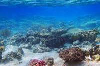 Tiran Island Cruise and Snorkeling