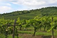Tokaj Wine Country Day Trip from Budapest