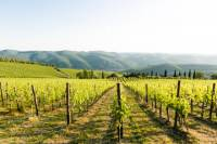 Tour and Tasting at an Organic Winery in the Heart of Chianti Classico Area