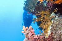 Trip to Ras Mohammed by boat from Sharm El Sheikh
