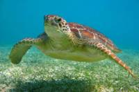 Turtles, Snorkeling and Cenotes Adventure in Akumal