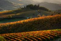 Tuscany Hiking Tour from Siena Including Wine Tasting