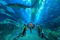 Underwater Zoo, Dubai Aquarium and Ice Rink Guided Day Tour
