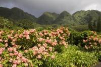 Valley of the Rainbows Oahu Small Group Adventure