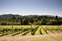 Vancouver Shore Excursion: Private Fraser Valley Wine Tour