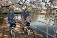 Viator Exclusive: Mt Vernon Trail and Washington DC Cherry Blossom Bike Tour from Alexandria